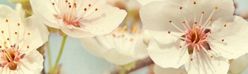 Flower Photography by Wall Art Prints