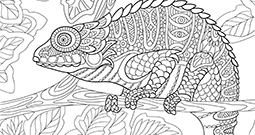 Wall Art Prints - Adult Colouring In
