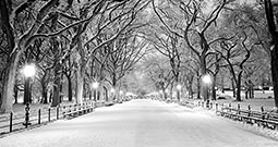 Wall Art Prints - Winter Pictures