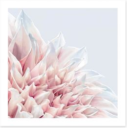 Soft pink dahlia Art Print 101032800