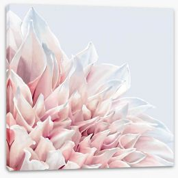 Soft pink dahlia Stretched Canvas 101032800