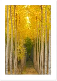 Forests Art Print 102098699