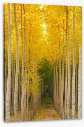 Forests Stretched Canvas 102098699