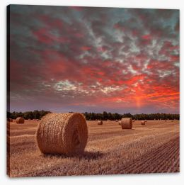 Meadows Stretched Canvas 102453523