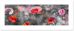 Spring poppy panoramic Art Print 102542164