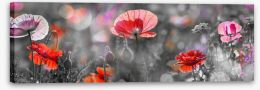 Spring poppy panoramic Stretched Canvas 102542164