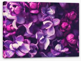 Flowers Stretched Canvas 108289994