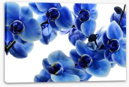 Flowers Stretched Canvas 108719239