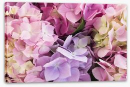 Flowers Stretched Canvas 113360649