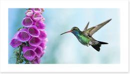 Birds Art Print 113857651