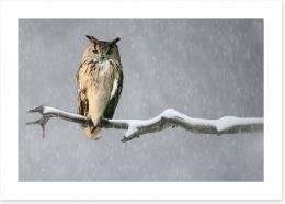 Birds Art Print 114512563