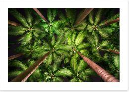 Palms by night Art Print 116749119