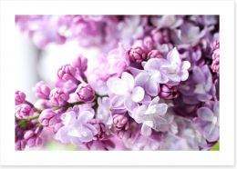 Flowers Art Print 121020143