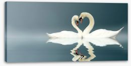 Love swans panorama Stretched Canvas 12112158