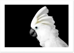 Birds Art Print 121497468