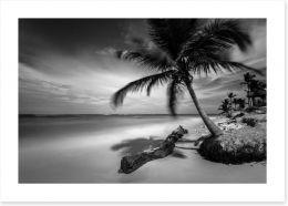 Palm tree shadows Art Print 123369966