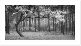 Black and White Art Print 124323695