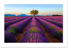 Meadows Art Print 125992482