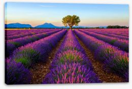 Meadows Stretched Canvas 125992482