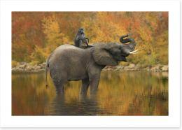 Mammals Art Print 128407604