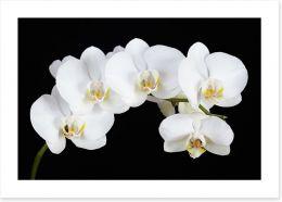 Flowers Art Print 132665663
