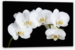 Flowers Stretched Canvas 132665663