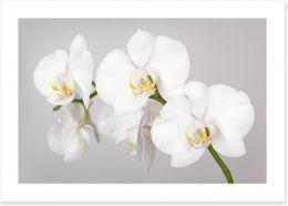Flowers Art Print 133396361