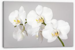 Flowers Stretched Canvas 133396361