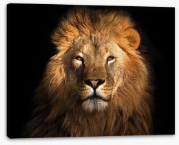 Mammals Stretched Canvas 135978399