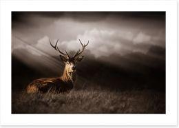 Mammals Art Print 136693257