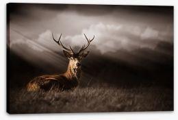 Mammals Stretched Canvas 136693257