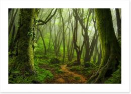 Forests Art Print 142175306