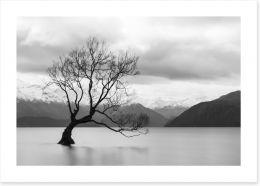 New Zealand Art Print 158504640