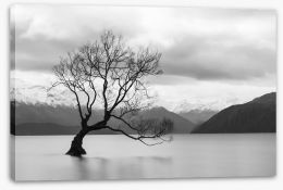 New Zealand Stretched Canvas 158504640