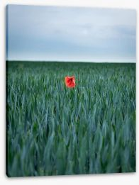 Meadows Stretched Canvas 159339259