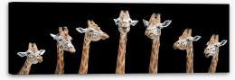 Mammals Stretched Canvas 159732335