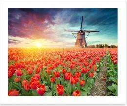Red tulip windmill, Netherlands
