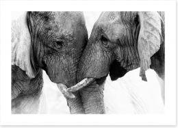 Mammals Art Print 168185023