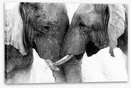 Mammals Stretched Canvas 168185023