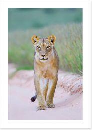 Mammals Art Print 168325811
