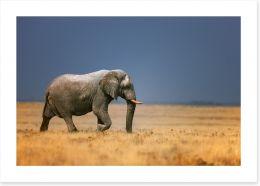 Africa Art Print 17375122