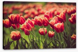 Meadows Stretched Canvas 197411146