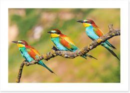 Birds Art Print 207673846