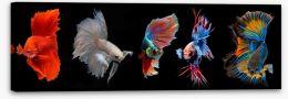 Fish / Aquatic Stretched Canvas 216071605