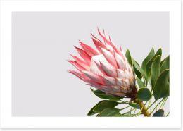 Flowers Art Print 218884830