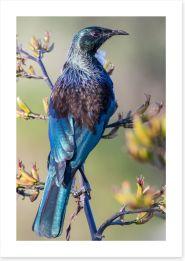Birds Art Print 245862961