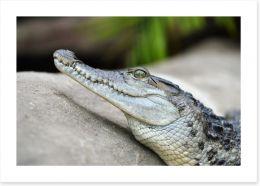 Reptiles / Amphibian Art Print 248411630