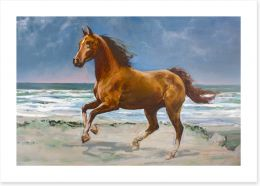 Chestnut horse on the shore Art Print 25000927