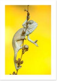 Reptiles / Amphibian Art Print 254251690