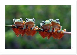 Reptiles / Amphibian Art Print 254371826